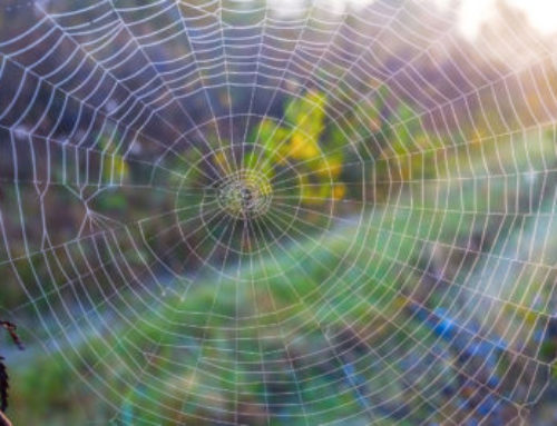 Weaving Webs: Multi-Level Networking for Small Business